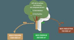 écosystème bois limousin dynamique